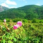 Vallée des Roses