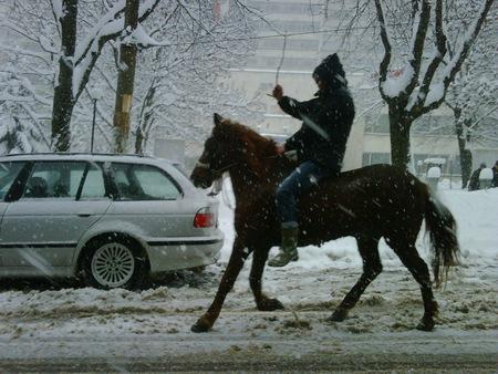 transport-sofia-cheval-neige-insolite